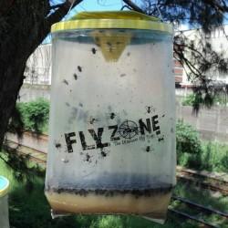 FLYZONE : PIÈGE À MOUCHES NON TOXIQUE, SANS DANGERS